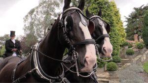 Graham & Sophie's carriage horses at Ashdown Park